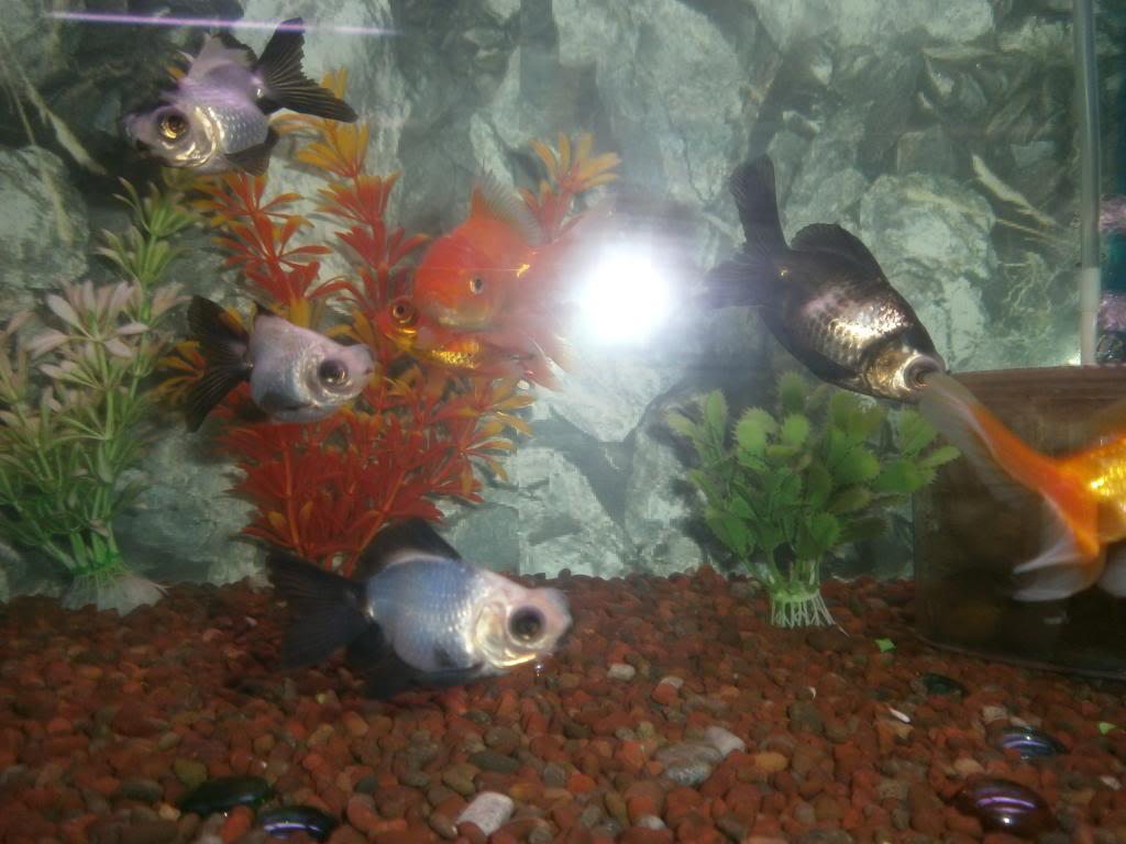 holas saludos de la casa acuario P2090517_zpsfe67be26