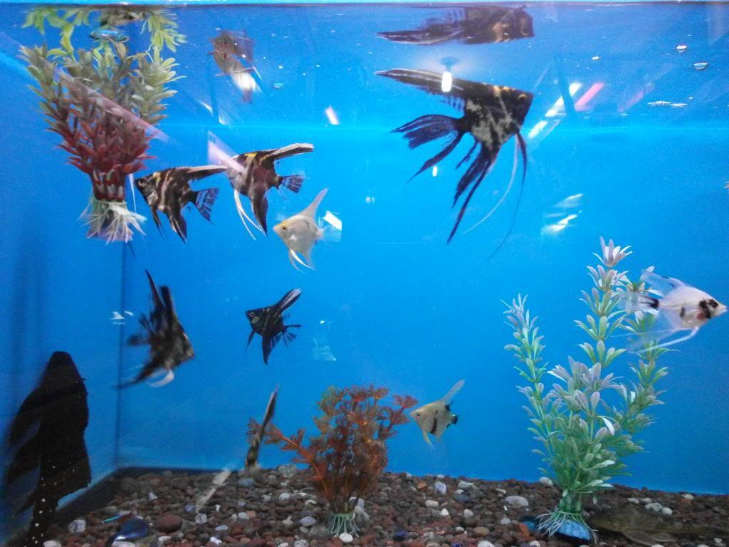 holas saludos de la casa acuario P2090521_zps6bf07d81