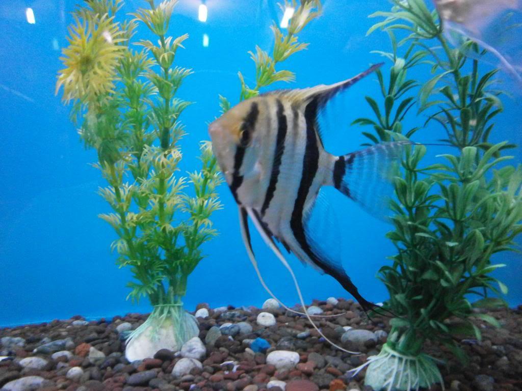 holas saludos de la casa acuario P2090522_zpse7ec1db8