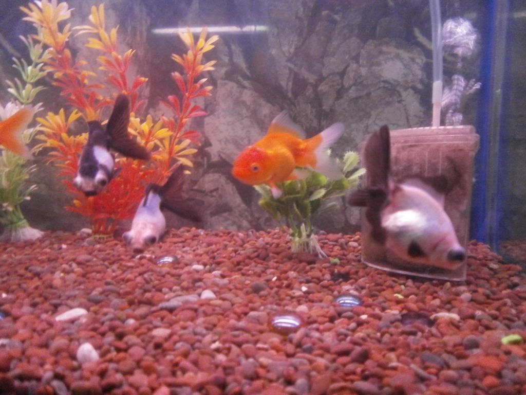 holas saludos de la casa acuario P2090541_zpsecba7ed4