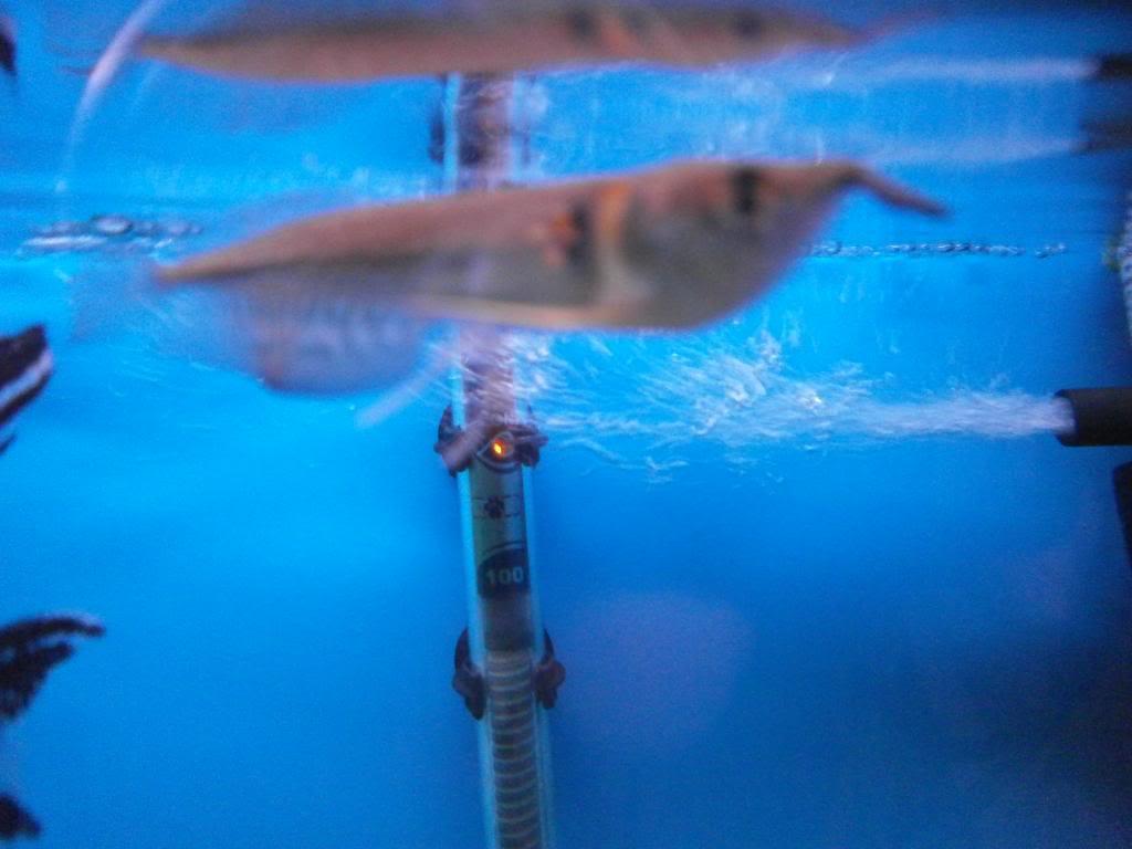 holas saludos de la casa acuario P2090544_zpsab1355b4