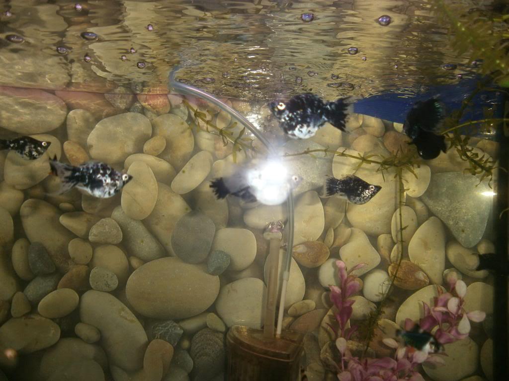 holas saludos de la casa acuario P2130639_zpsb3f74d1e