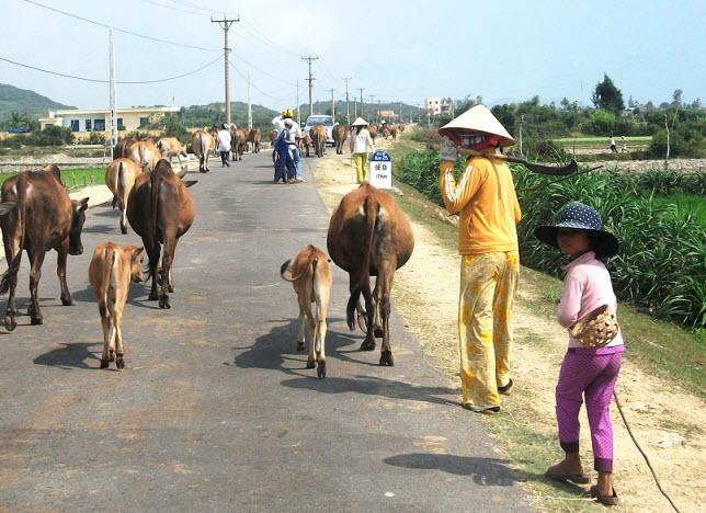 (6) Người Việt tiến vào phủ Hoài Nhơn 16_zps6e7a3fc1