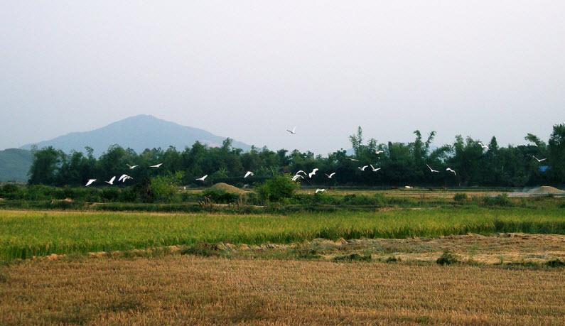 (6) Người Việt tiến vào phủ Hoài Nhơn 38_zpsf466bb70