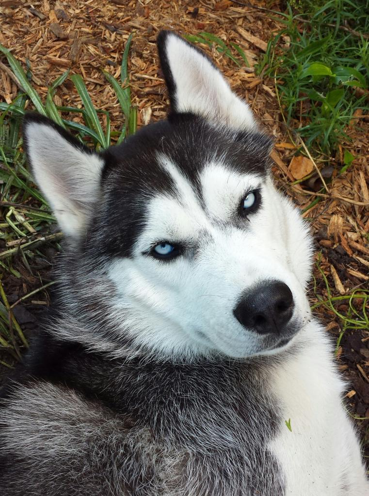 What's Your Husky Story? - Page 2 20140926_080518-1_zpsuqkpgm0x