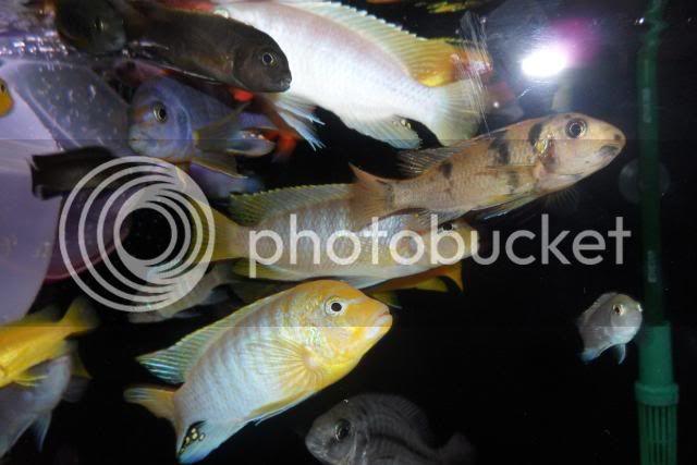 Feb 2010 pics SAM_0337