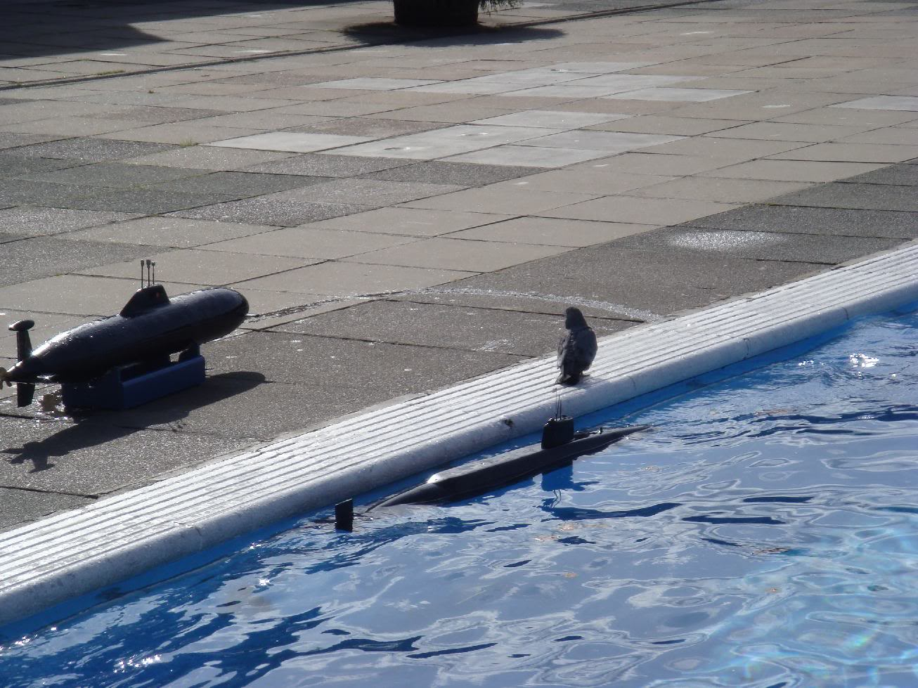 1st Brockwell Lido dive In of 2011 (Sunday 27th March) 8dca35ff