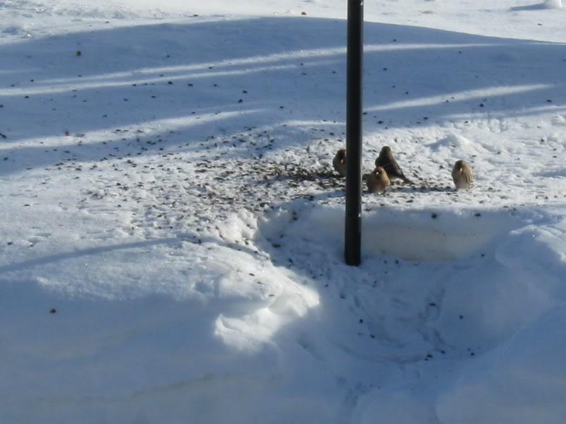 avez-vous des oiseaux à vos mangeoires Testcanon013