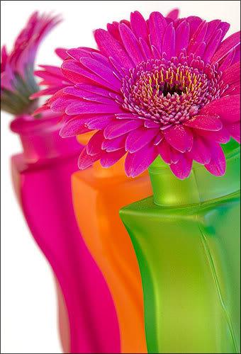 dhuroni lule nje antari..:):) - Faqe 2 Flowers