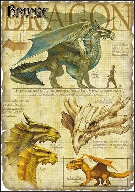 DRAGONS Bronzedragon