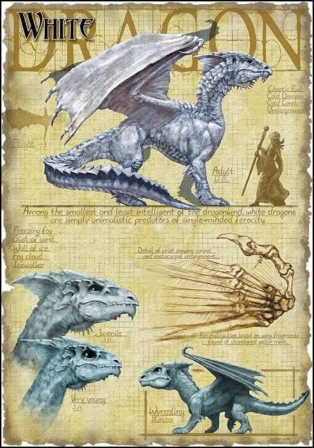 DRAGONS Whitedragon