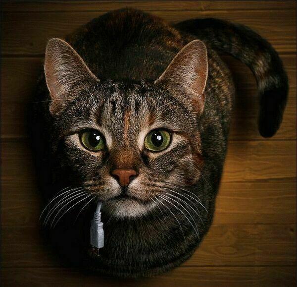 Imágenes de gatos. Cd80af69_zps055a0c72