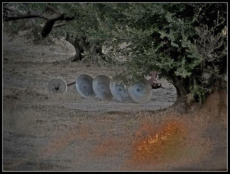 Un arado en un olivar 106baja_zpsf12cfc8b