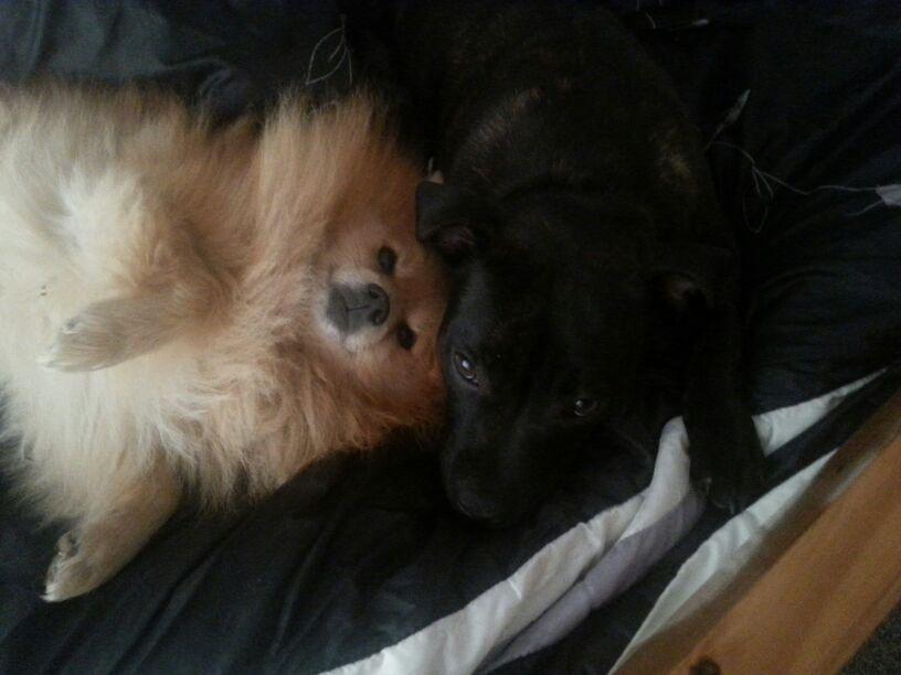 Roxi and her friend Boris 5E614232-ACAF-485B-8D0E-6821288705DD_zpsygd0moea
