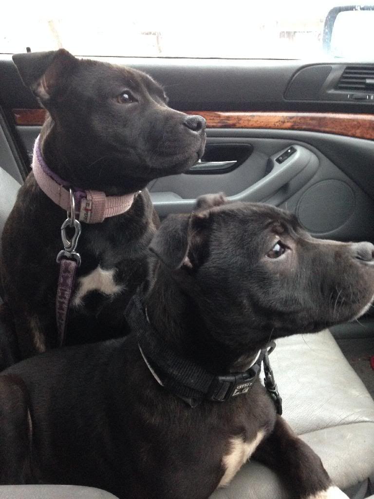 Roxi and her sister Rosie C4029971-F224-4646-BBBE-BE13527989CD_zpsco5git3u