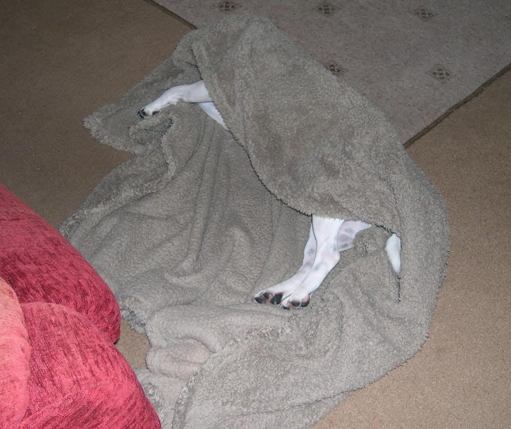 sleeping where she  fell lol 011_zpsecd5ec0f