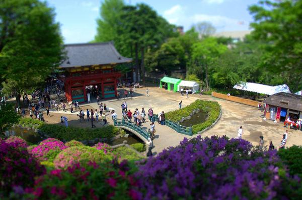 [Du lịch][Tin tức] 32 Ngôi chùa và Đền thờ ở Tokyo 11-nezu-shrine-tokyo-1182_zps9636c013