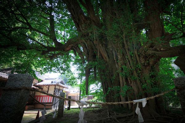 [Du lịch][Tin tức] 32 Ngôi chùa và Đền thờ ở Tokyo 25-Nogi-Shrine-1182_zps17763e5f