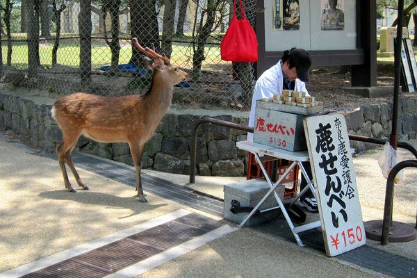 [Ẩm thực] 24 Món ăn đường phố Nhật Bản 5-deer-senbei-75_zps2a8b60b3