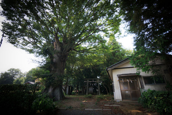 [Du lịch][Tin tức] Đền Atago: Nấc thang lên thiên đường của Tokyo 6-the-top-1186_zps16ac9c8b