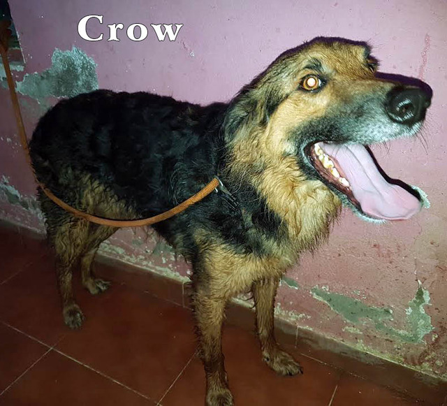 AU - Crow  83_zpsxgj0cktt