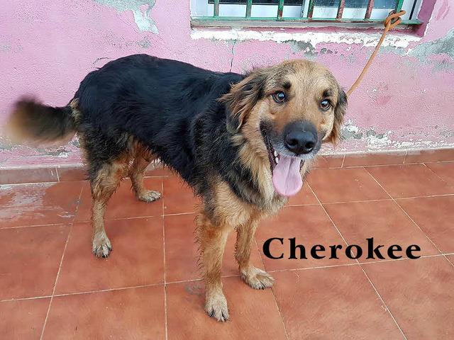 AU - Cherokee 77_zpsqeymjfbn