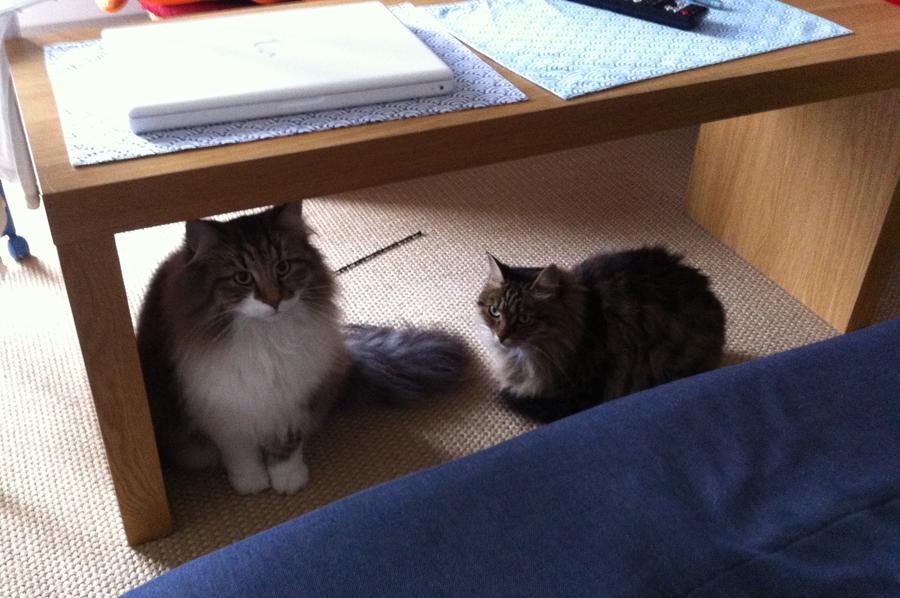 Cohabitation et intégration entre deux chats Souslatable_zps328ad0b4