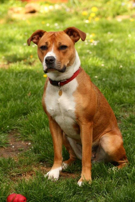 Cassie's Pups Brandy002_zps18a88aa2