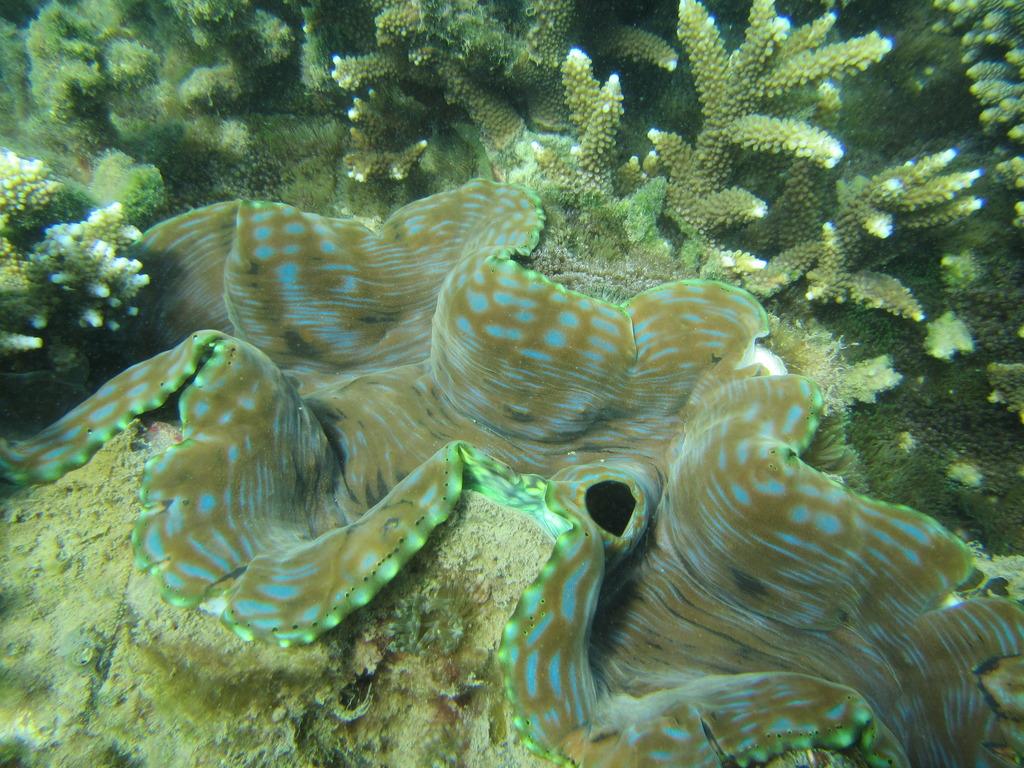 Trip to Great Keppel Island IMG_0213_zpspm3cretf