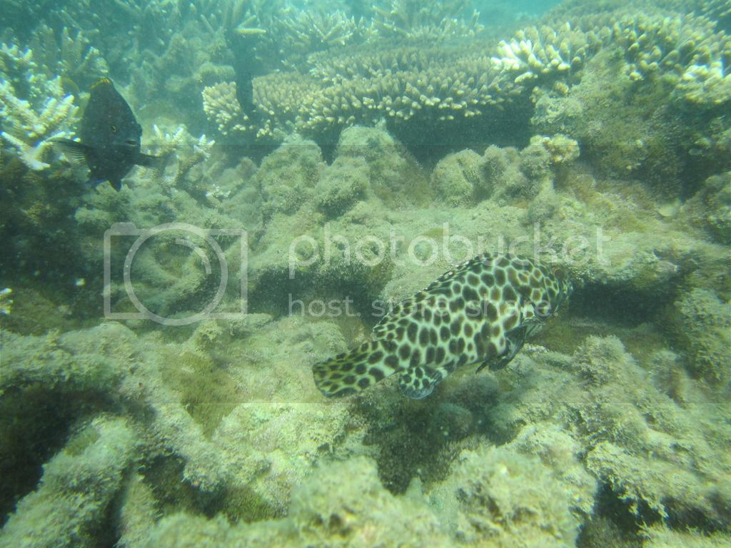 Trip to Great Keppel Island IMG_0220_zpskr9hxjts