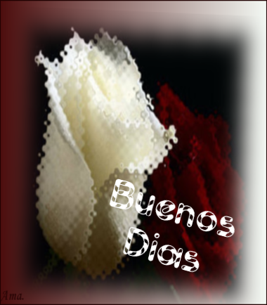 Bonitas rosas blanca y roja 8naBEhGGbx3a_zpszbdtitf8