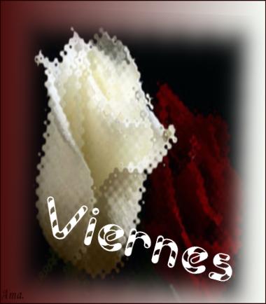 Bonitas rosas blanca y roja C9ueXGnU4w6M_zpswfuem0v5