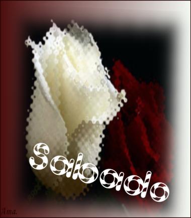 Bonitas rosas blanca y roja G4uRXKFdsl0e_zps5u9xt7gt