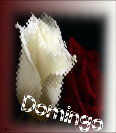 Bonitas rosas blanca y roja PP74mM5M1lgL_zpsm40sbb9i