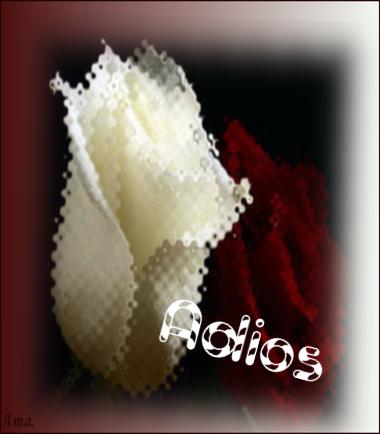 Bonitas rosas blanca y roja PvTVJW1yHMKC_zps5ydiegwj
