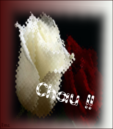 Bonitas rosas blanca y roja QsnWUyN7t8Xz_zpsrmo3h41q