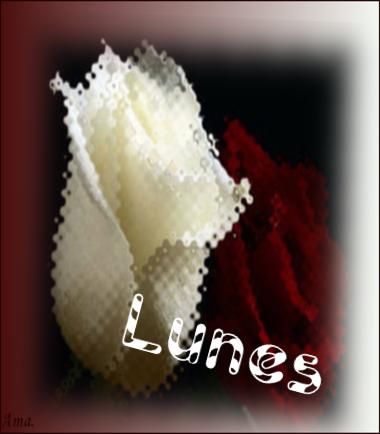 Bonitas rosas blanca y roja T8dOOAwULLeb_zps7tv4bs0s
