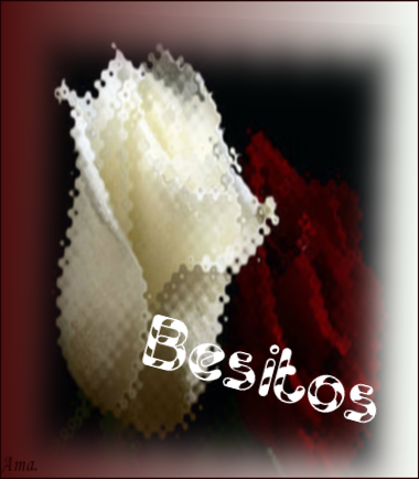 Bonitas rosas blanca y roja X9j5XU0BKWq4_zpsxiqo9c70