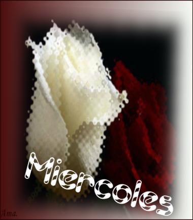 Bonitas rosas blanca y roja Zgd35WfPuQq1_zpse2mwq6in