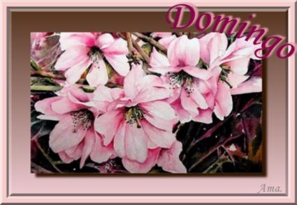 Rosas Chinas  Domingo_zpsu9jbf35s