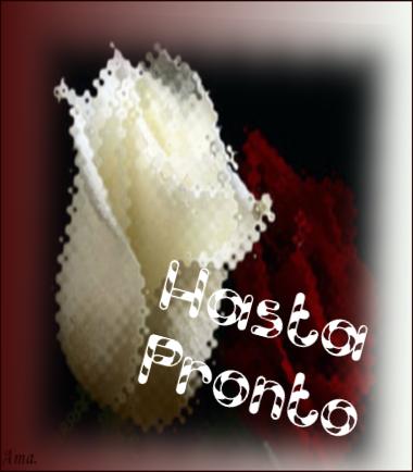 Bonitas rosas blanca y roja K473MCopyAjU_zpshw4dysw9