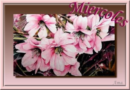 Rosas Chinas  Miercoles_zpslnfrqiss
