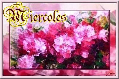 Peonias fucsias Miercoles_zpsrrv86z7f