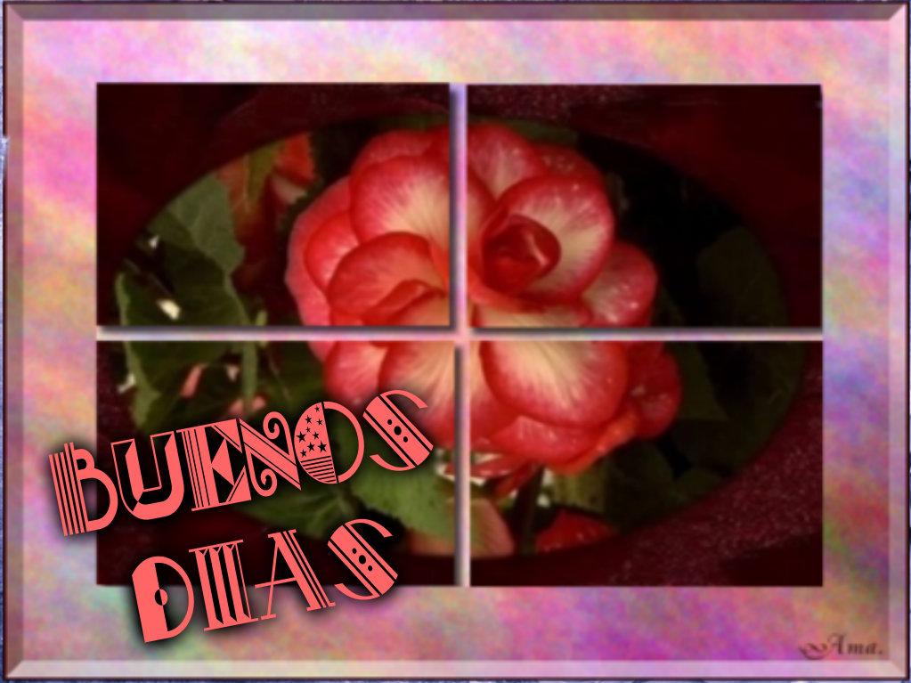 Rosa Dividida en Cuatro Pizap.com14287686524821_zpszgv8grbw
