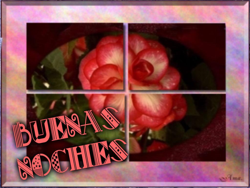 Rosa Dividida en Cuatro Pizap.com14287694668183_zpsm8kao3ka