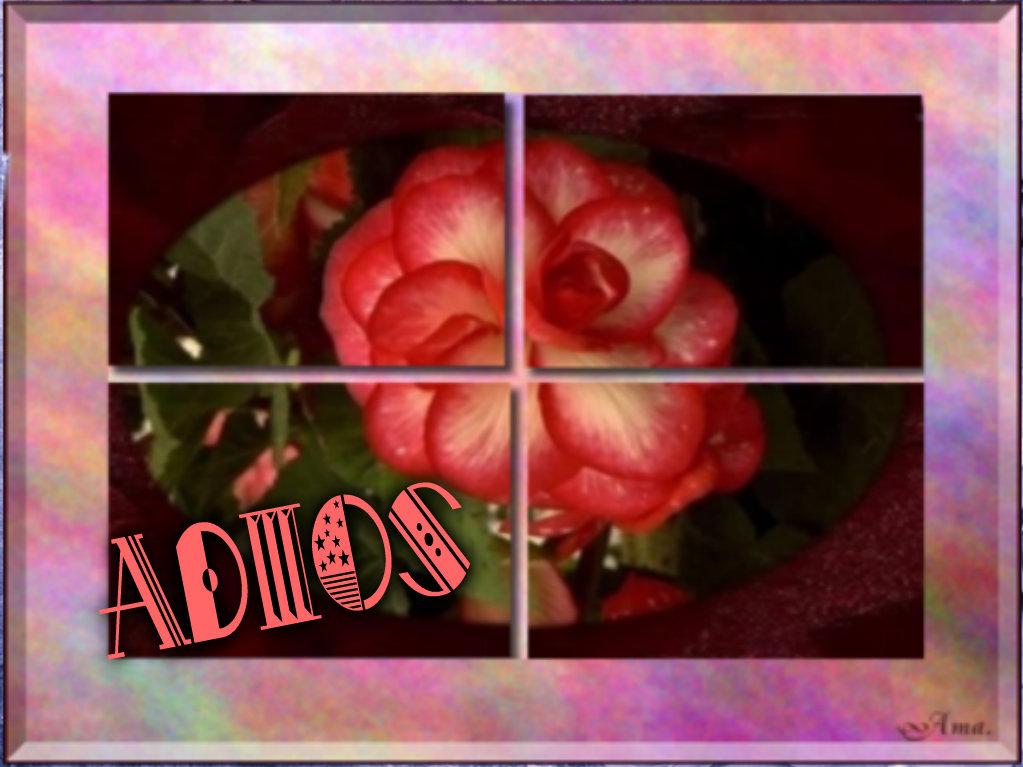 Rosa Dividida en Cuatro Pizap.com14287695006584_zpsb6m2nqqq