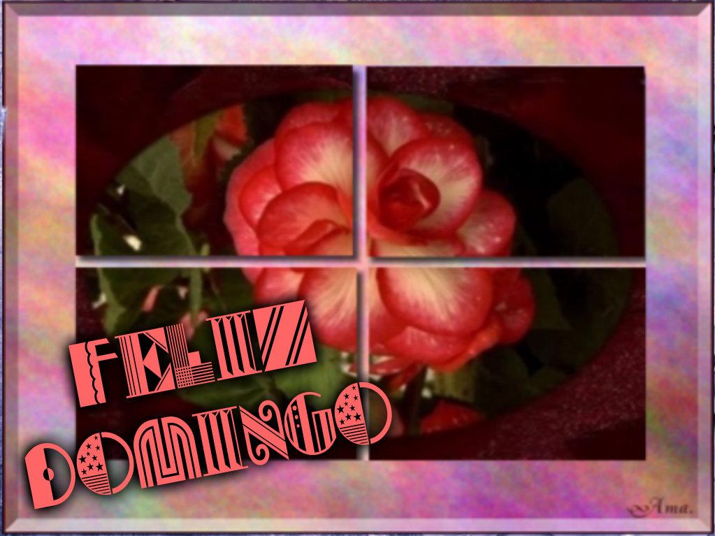 Rosa Dividida en Cuatro Pizap.com14287695887587_zpszwubjp9j