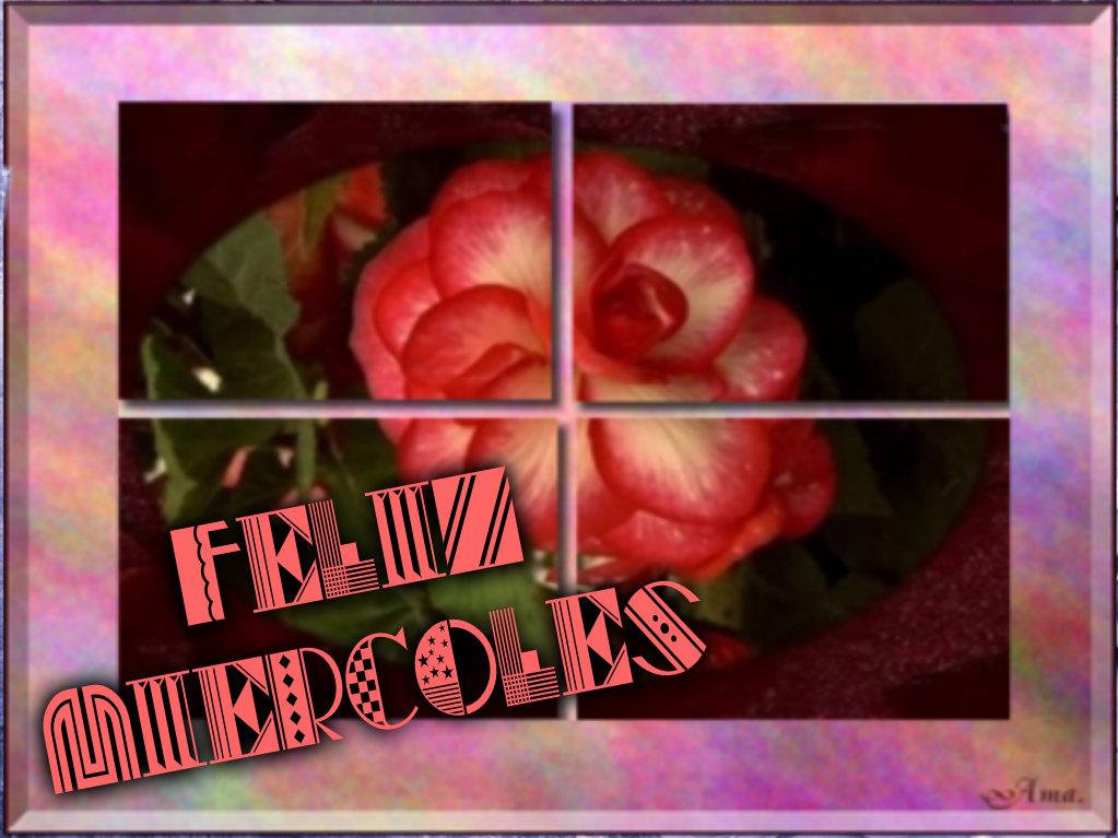 Rosa Dividida en Cuatro Pizap.com14287696418008_zpsyxmghsex