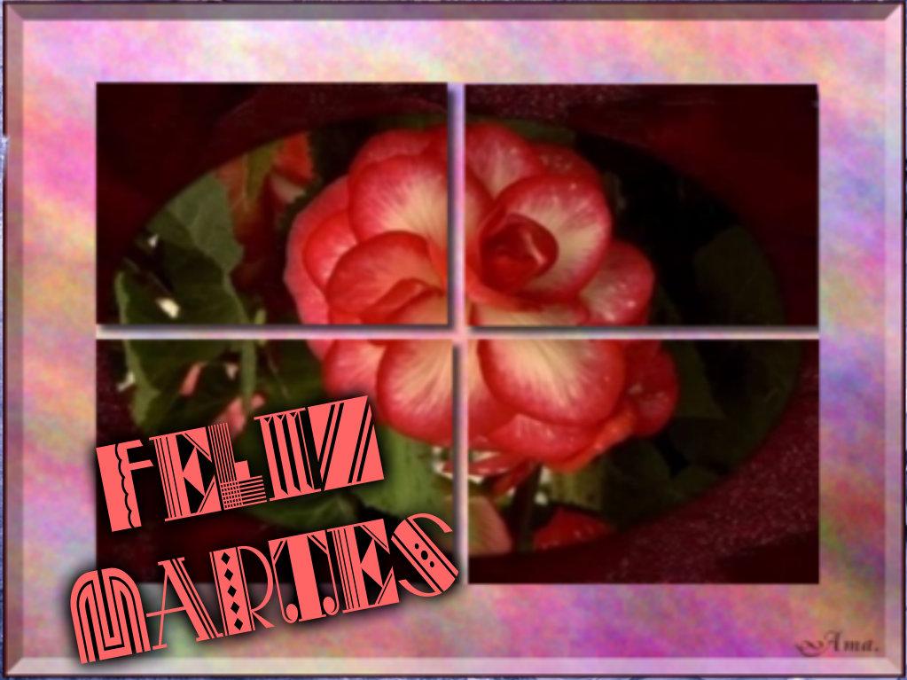 Rosa Dividida en Cuatro Pizap.com142876971101110_zpsoac6v4lp