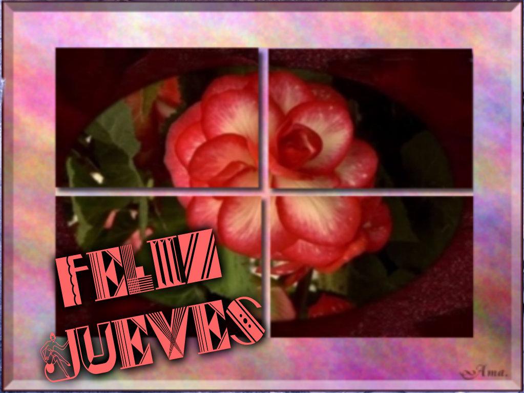 Rosa Dividida en Cuatro Pizap.com142876973295111_zpsvhdfumoq